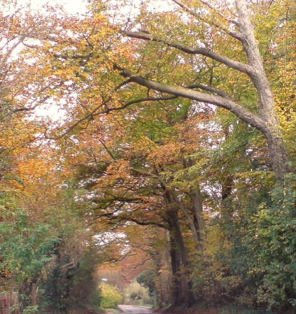 Elham Valley Road in autumn, by Steve